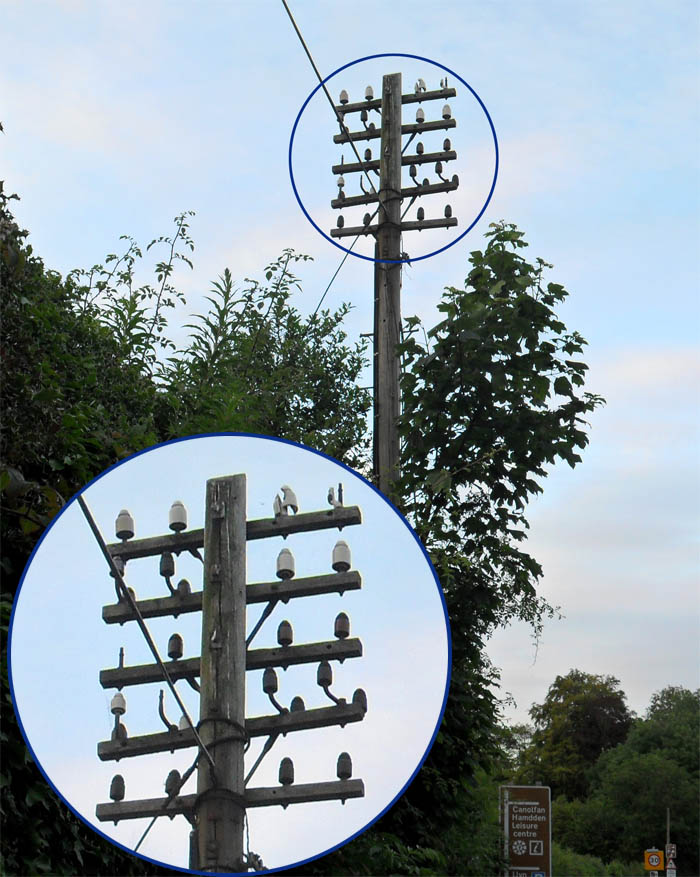 Could this be the fabled lost telegraph pole of Bala Leisure Centre?