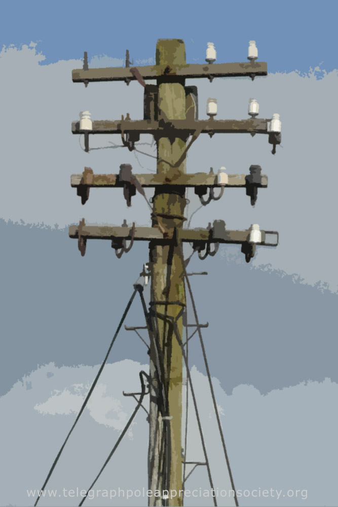 A Telegraph Pole on a postcard