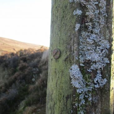 old telegraph pole .This is on the mine footpath that leads from the Warren House inn on Dartmoor to Vitifer Mine