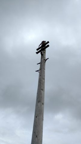 Redundant pole, 2 arms, no insulators or wires. Probably on Isle of Lewis